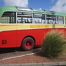 Bush and Bus  by jmnicolson