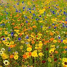 Field of Yellow and Blue Flowers by edsimoneit