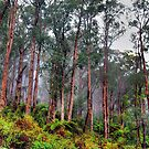 We Will Return - Yarra Ranges National Park - The HDR Experience by Philip Johnson