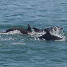 Three Dolphins by lezvee