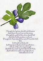 Hope - Habakkuk 3:17-19   by Diane Hall