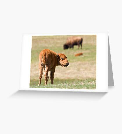Cinnamon Baby Greeting Card