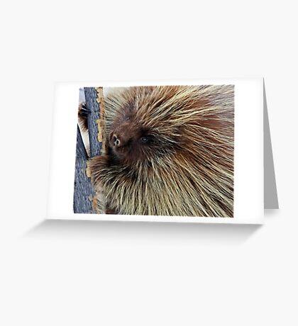 Porcupine Hard At Work Greeting Card