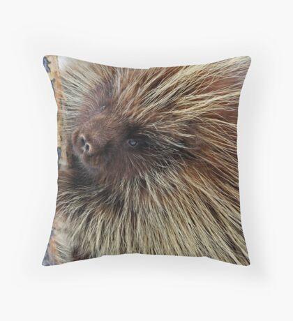 Porcupine Hard At Work Throw Pillow