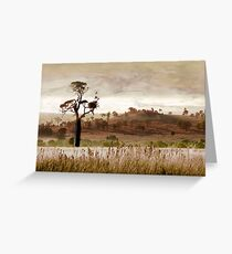 Gondwana Boab Greeting Card