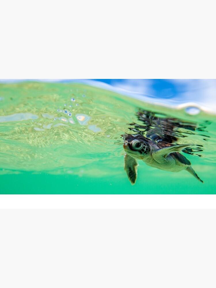 Ocean swimmer by DavidWachenfeld