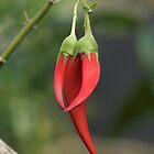 Kaka beak - a beautiful native.......!! by Roy  Massicks