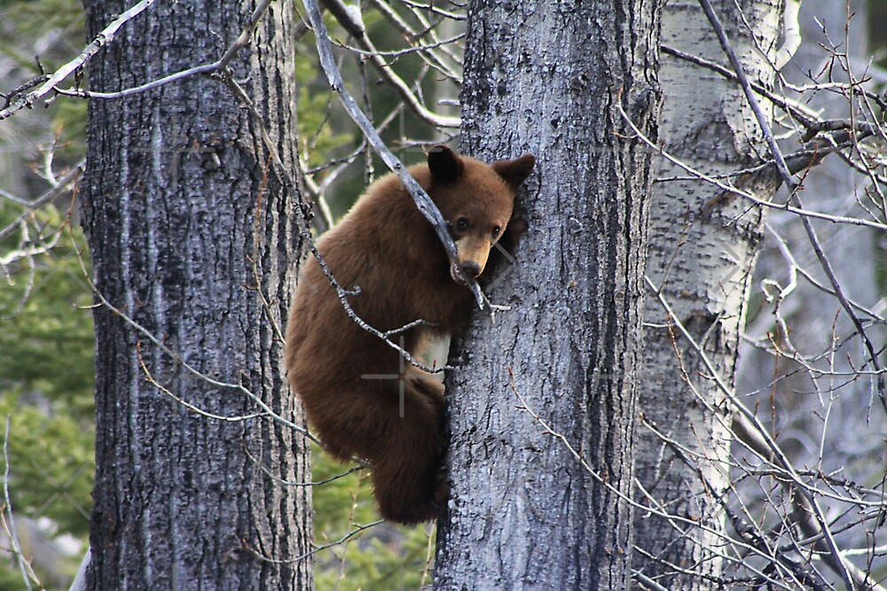 Chewing a Branch by Alyce Taylor