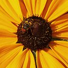 Bee Happy by Hallie Duesenberg