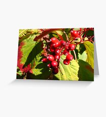Berries in the Forest... Greeting Card