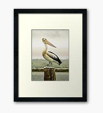 Pelican Poise Framed Print