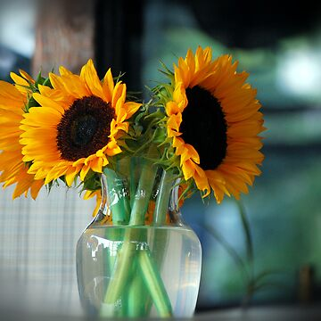sunflowers by scottdesigns