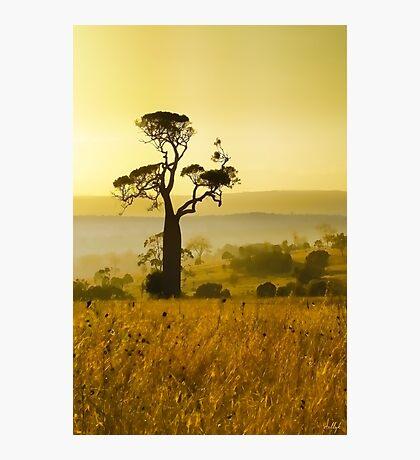 A Boab Sunrise Photographic Print