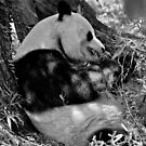 The Giant Panda by maileilani