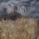Grass Hearts © Vicki Ferrari Photography by Vicki Ferrari
