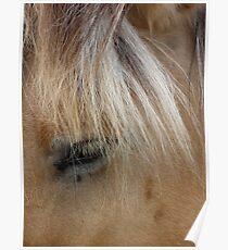 Horse 3 (Equus ferus caballus) Poster