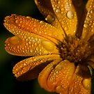morning dew by Stefan Trenker