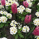 Deep Pink Hyacinths and White Primroses by BlueMoonRose