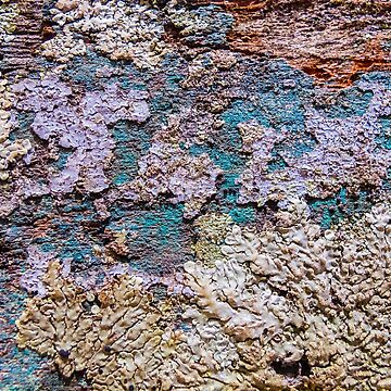 A Lichen natural texture pattern by juancalop