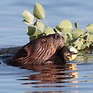Busy as a Beaver by Jillian Jones