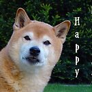 shiba happy birthday by marasdaughter