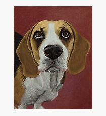 BEAGLE Photographic Print