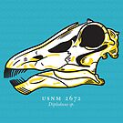 Diplodocus fossil skull by David Orr