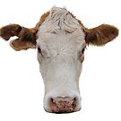 Red Cow with White Face by Bonnie T.  Barry
