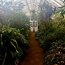 Tropical House, Dunedin Botanic Garden, New Zealand by Douglas E.  Welch