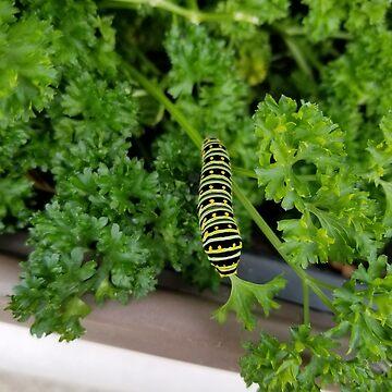 Caterpillar by Energykotash