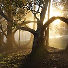 Golden Circles - Adelaide Hills by MagpieSprings