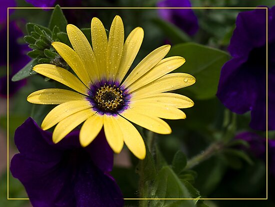 Purple and Yellow by Kathy Weaver