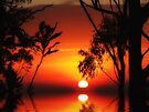 """""""Tropical Sunrise"""" by debsphotos"""