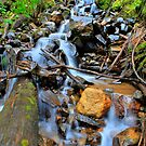 Camp Creek by Tim Wright