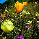 Dreaming of Spring Wildflowers by Myillusions