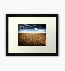 Alberta Wheat Field Framed Print