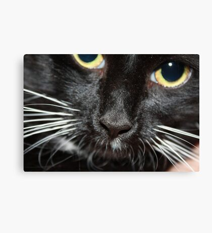 Kitty's Nose Canvas Print