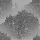 Black, White and Grey Countryside Tree By KABFA Miss K L Slomczynski by KABFA