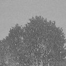 Black, White and Grey Countryside Trees By KABFA Miss K L Slomczynski by KABFA