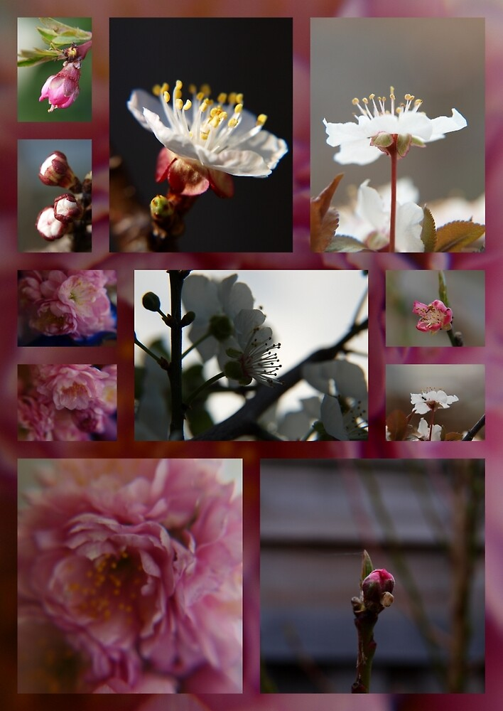 the short life of blossoms by byzantinehalo