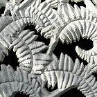 Graceful Black And White Fern Patterns - Take Two by Georgia Mizuleva