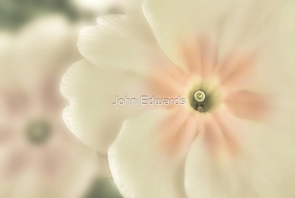 Elatior by John Edwards