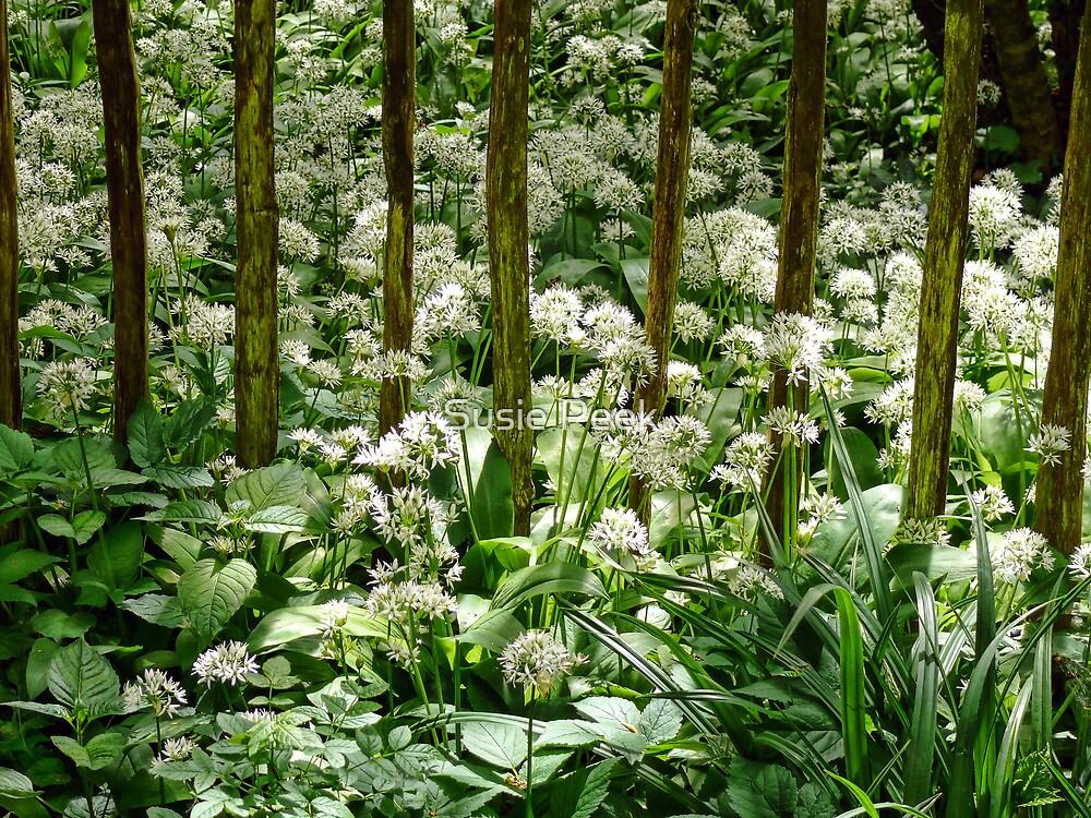 Wild Garlic ~ Lyme Regis by Susie Peek