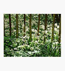 Wild Garlic ~ Lyme Regis Photographic Print