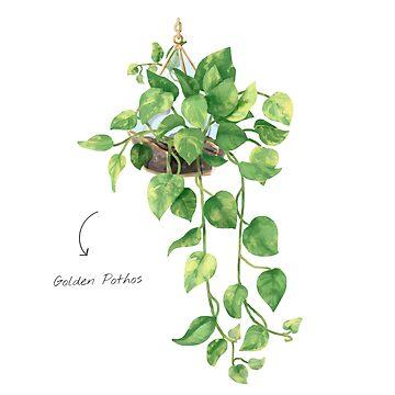 Golden Pathos - [Indoor Plant Love] by xJLe