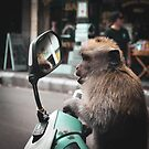Balinese Monkey on Scooter by Monica Carvalho (mofart_photomontages)