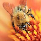Buckfast Abbey Bee by Kimberley Davitt