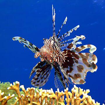 Lionfish by lilithlita