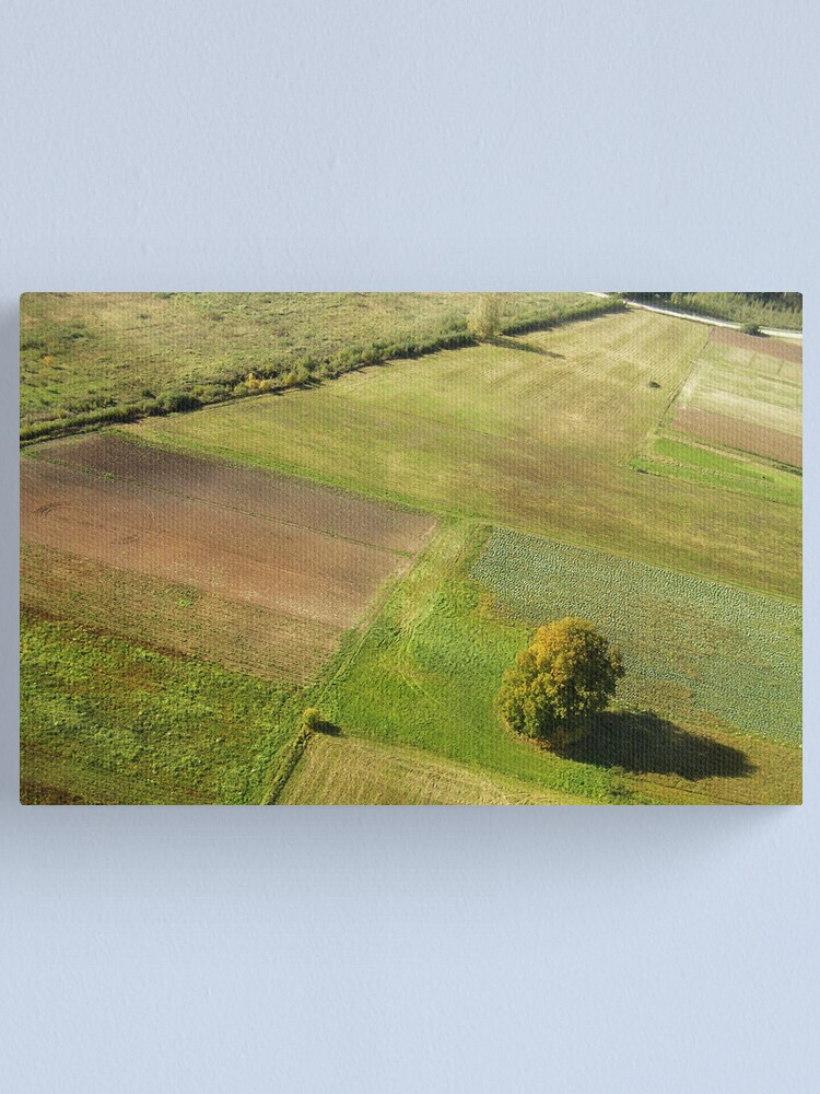 Alternate view of Lonely tree (The Baltic states) Canvas Print