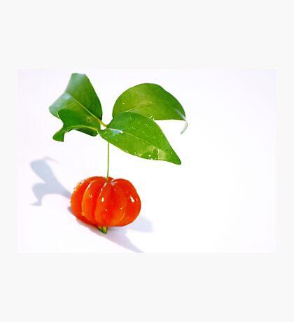 Brazilian Cherry Photographic Print